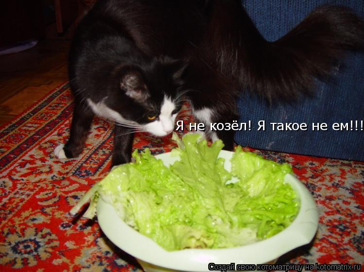 Котоматрица: Я не козёл! Я такое не ем!!!