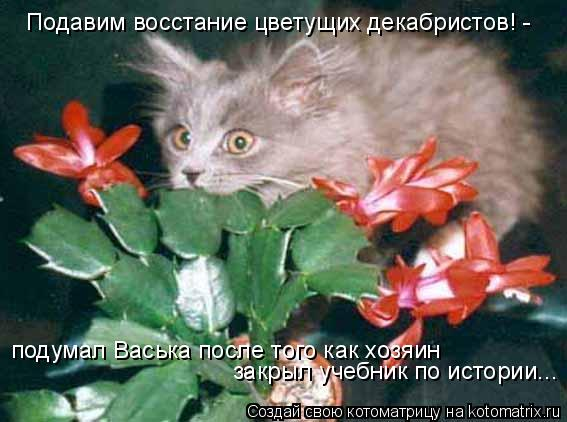 Котоматрица: Подавим восстание цветущих декабристов! - подумал Васька после того как хозяин закрыл учебник по истории...