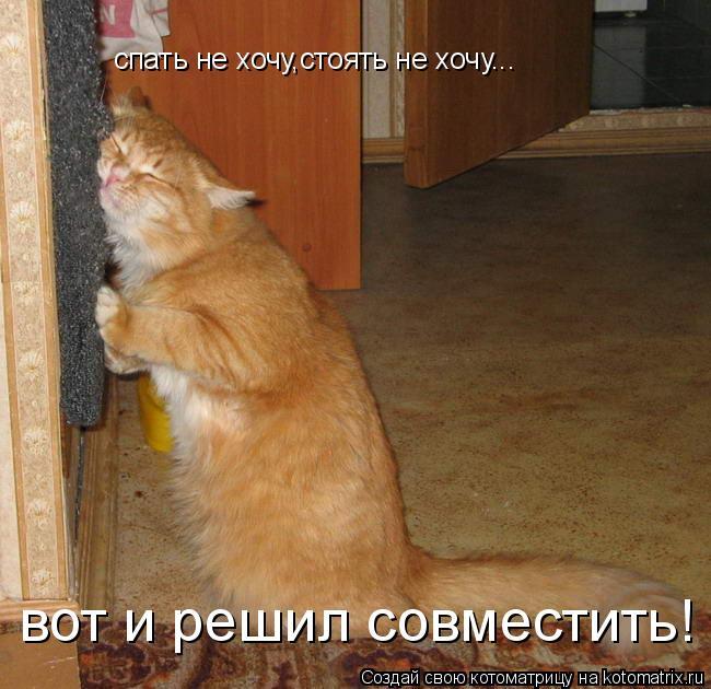 Котоматрица: спать не хочу,стоять не хочу... вот и решил совместить!