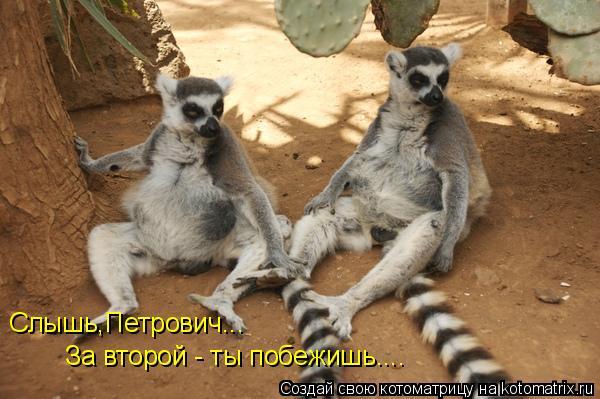 Котоматрица: Слышь,Петрович... За второй - ты побежишь....