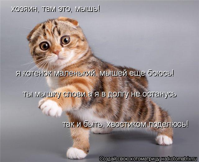 Котоматрица: хозяин, там это, мышь! я котенок маленький, мышей еще боюсь! ты мышку слови,а я в долгу не останусь так и быть, хвостиком поделюсь!