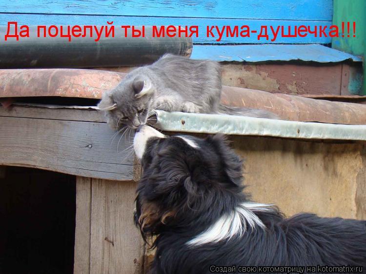 Котоматрица: Да поцелуй ты меня кума-душечка!!!
