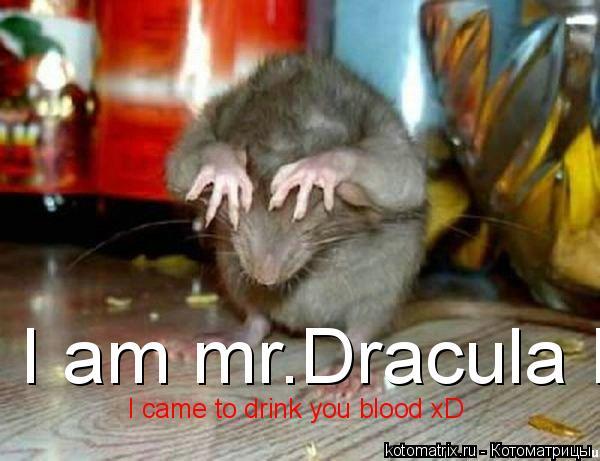 Котоматрица: I am mr.Dracula I came to drink you blood xD  I came to drink you blood xD