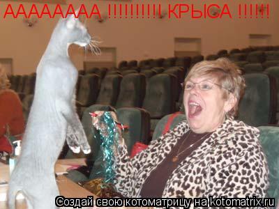 Котоматрица: АААААААА !!!!!!!!!! КРЫСА !!!!!!