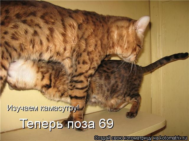 Котоматрица: Изучаем камасутру! Теперь поза 69