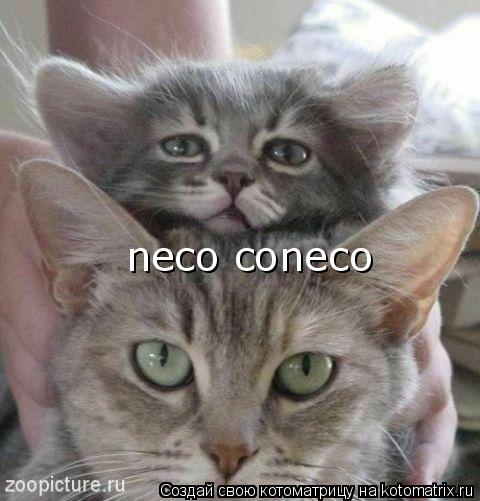 Котоматрица: neco coneco