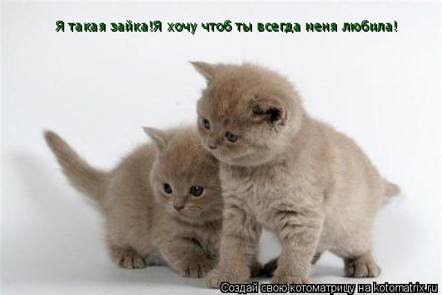 Хочу чтобы кот меня любил