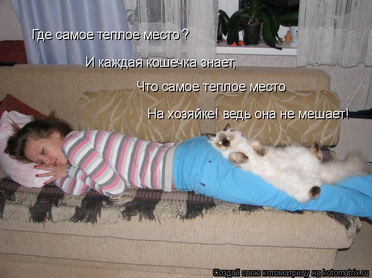 Котоматрица: Где самое теплое место ? И каждая кошечка знает, Что самое теплое место На хозяйке! ведь она не мешает!