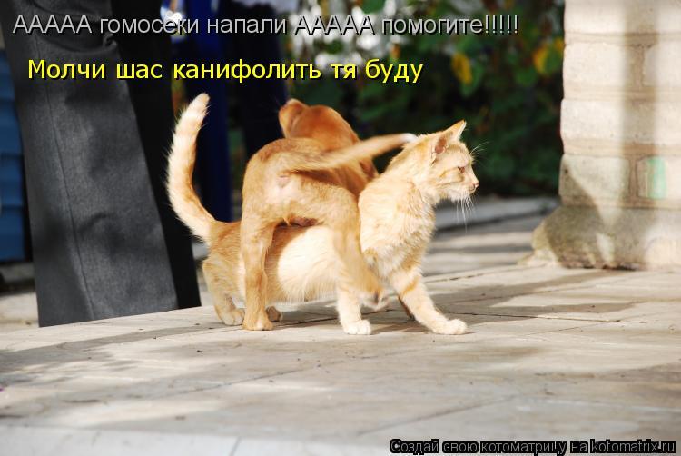 Котоматрица: ААААА гомосеки напали ААААА помогите!!!!! Молчи шас канифолить тя буду