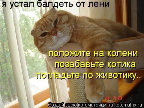 Котоматрица: я устал балдеть от лени положите на колени позабавьте котика погладьте по животику..