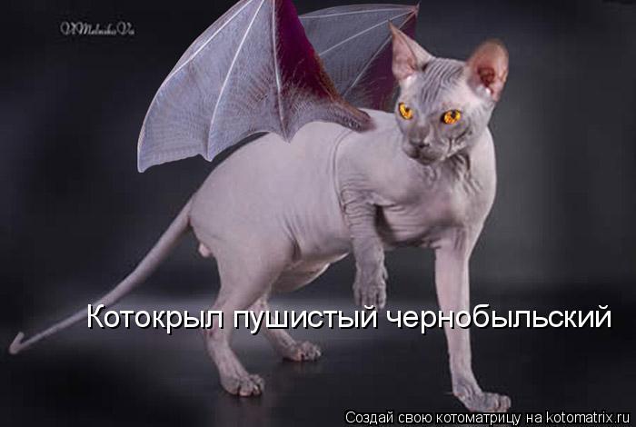 Котоматрица: Котокрыл пушистый чернобыльский