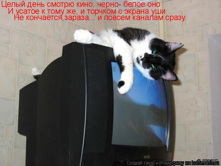 Котоматрица: Целый день смотрю кино, черно- белое оно И усатое к тому же, и торчком с экрана уши Не кончается,зараза... и повсем каналам сразу.