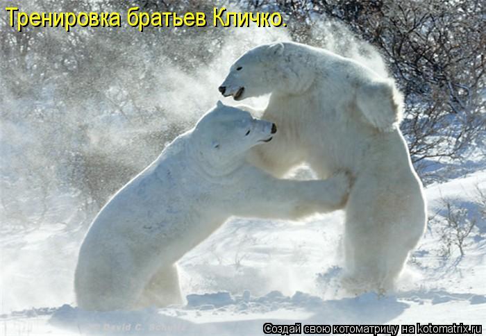 Котоматрица: Тренировка братьев Кличко.
