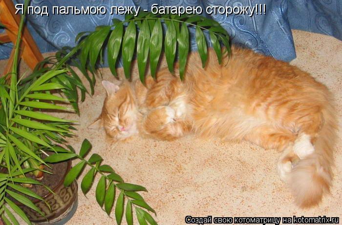 Котоматрица: Я под пальмою лежу - батарею сторожу!!!