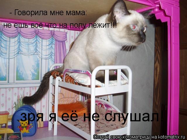 Котоматрица: - Говорила мне мама: не ешь всё что на полу лежит!!! зря я её не слушал!