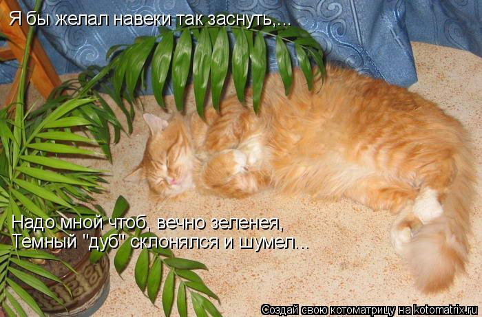 """Котоматрица: Я бы желал навеки так заснуть,... Надо мной чтоб, вечно зеленея, Темный """"дуб"""" склонялся и шумел..."""