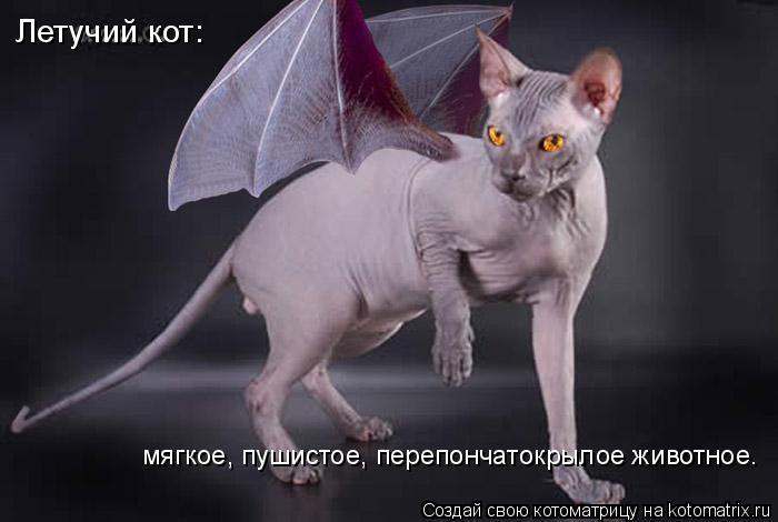 Котоматрица: Летучий кот: мягкое, пушистое, перепончатокрылое животное.
