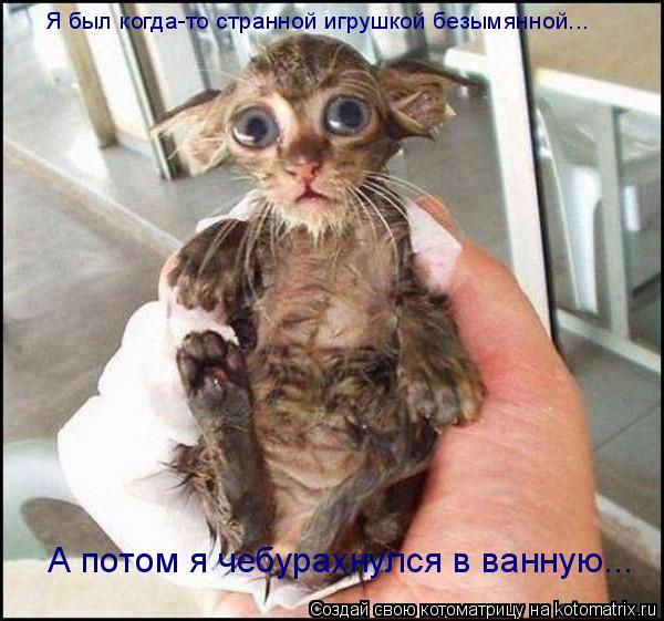 Котоматрица: Я был когда-то странной игрушкой безымянной... А потом я чебурахнулся в ванную...