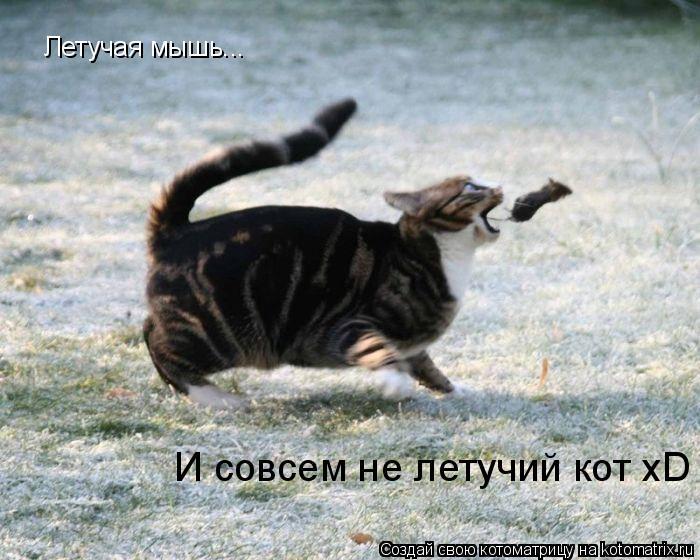 Котоматрица: Летучая мышь... И совсем не летучий кот xD