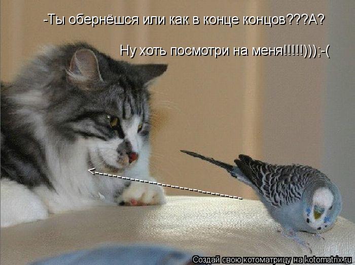 Котоматрица: -Ты обернёшся или как в конце концов???А? Ну хоть посмотри на меня!!!!!)));-( <---------------------------------