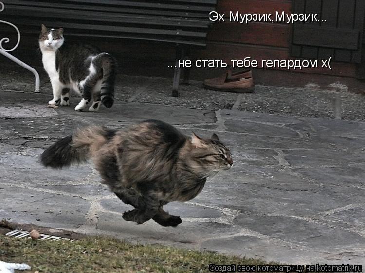Котоматрица: Эх Мурзик,Мурзик... ...не стать тебе гепардом х(