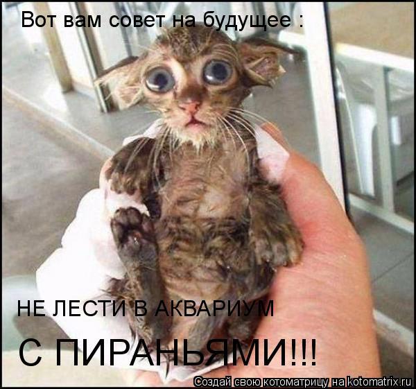 Котоматрица: Вот вам совет на будущее : НЕ ЛЕСТИ В АКВАРИУМ  С ПИРАНЬЯМИ!!!