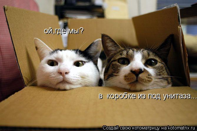 Котоматрица: ой,где мы? в  коробке из под унитаза...