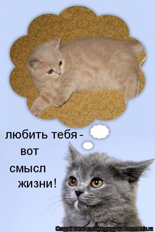 Котоматрица: любить тебя вот смысл жизни! -