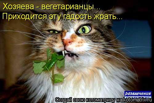 Котоматрица: Хозяева - вегетарианцы... Приходится эту гадость жрать...