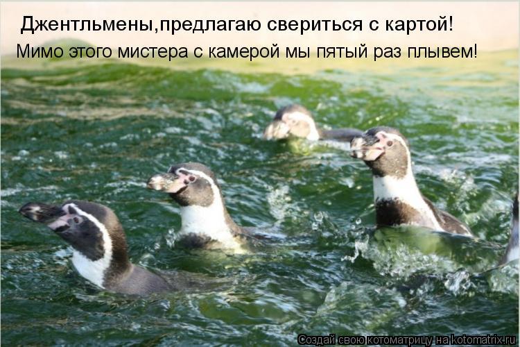 Котоматрица: Джентльмены,предлагаю свериться с картой! Мимо этого мистера с камерой мы пятый раз плывем!