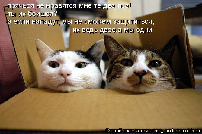 Котоматрица: -прячься,не нравятся мне те два пса! -ты их боишся? -а если нападут, мы не сможем защититься, их ведь двое,а мы одни