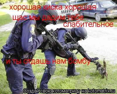Котоматрица: хорошая киска хорошая щас мы дадим тебе  слабительное и ты отдашь нам бомбу
