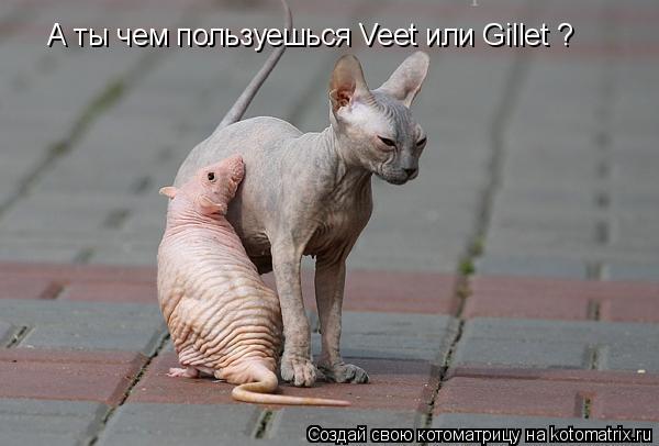 Котоматрица: А ты чем пользуешься Veet или Gillet ?
