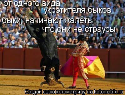 Котоматрица: от одного вида укротителя быков быки, начинают жалеть что они не страусы