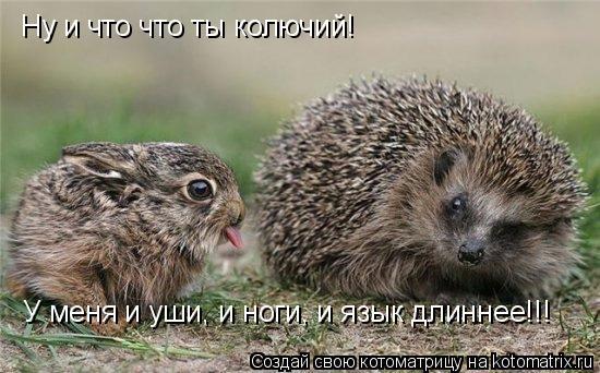 Котоматрица: Ну и что что ты колючий! У меня и уши, и ноги, и язык длиннее!!!