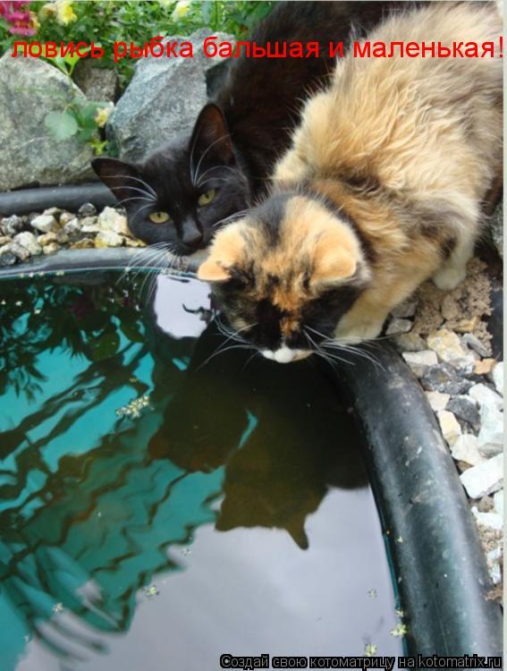 Котоматрица: ловись рыбка бальшая и маленькая!!