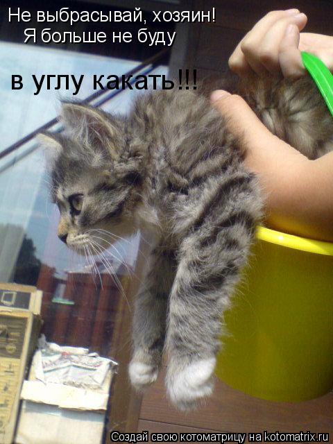 Котоматрица: Не выбрасывай, хозяин! Я больше не буду в углу какать!!!
