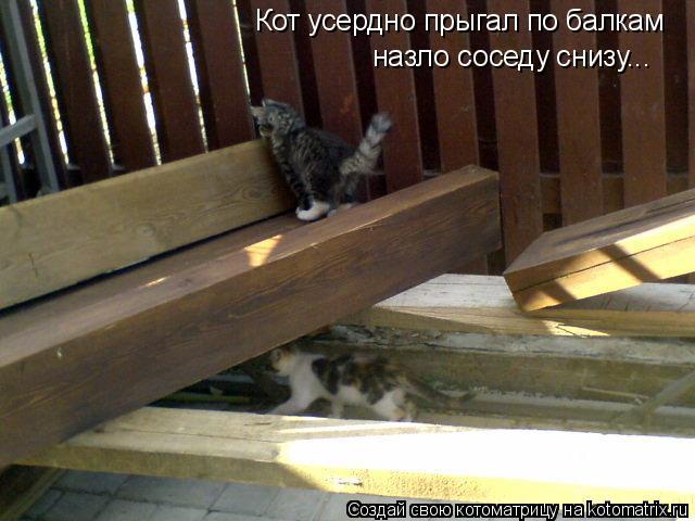 Котоматрица: Кот усердно прыгал по балкам назло соседу снизу...