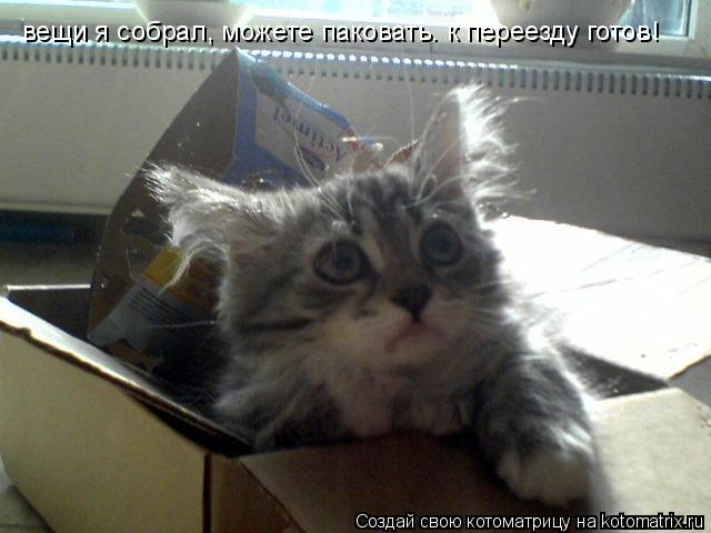 Котоматрица: вещи я собрал, можете паковать. к переезду готов!