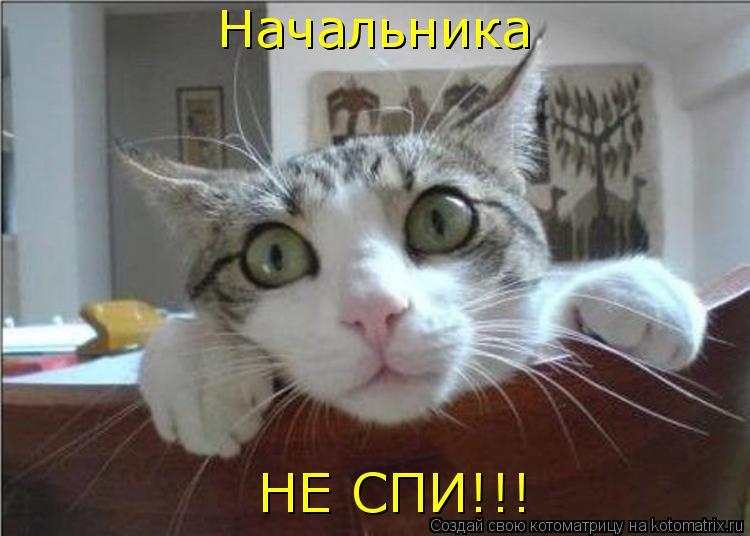 Котоматрица: Начальника НЕ СПИ!!!