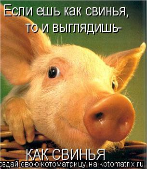 Котоматрица: Если ешь как свинья, то и выглядишь- КАК СВИНЬЯ