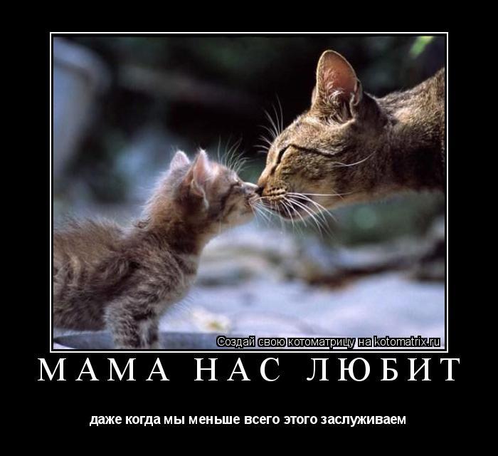 Котоматрица: Мама нас любит даже когда мы меньше всего этого заслуживаем