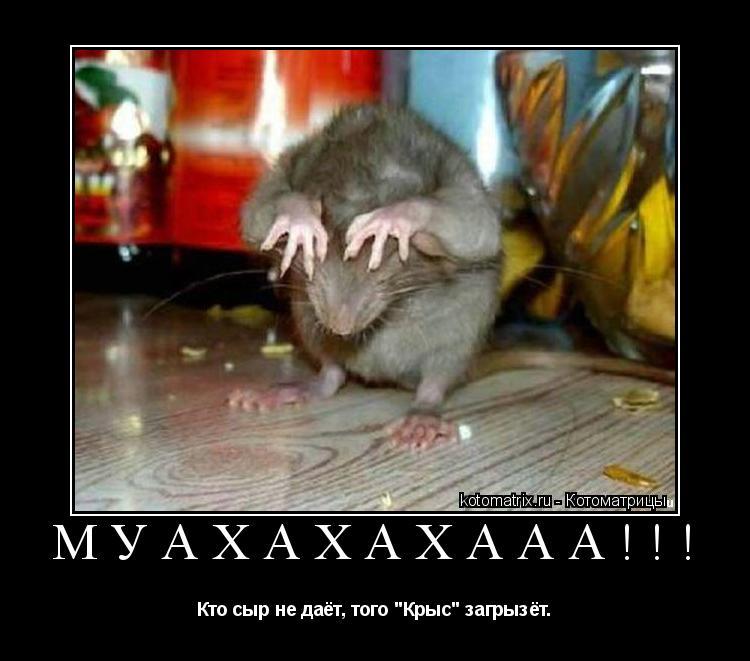 "Котоматрица: МУАХАХАХААА!!! Кто сыр не даёт, того ""Крыс"" загрызёт."