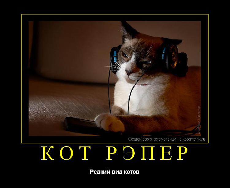 Котоматрица: Кот Рэпер Редкий вид котов