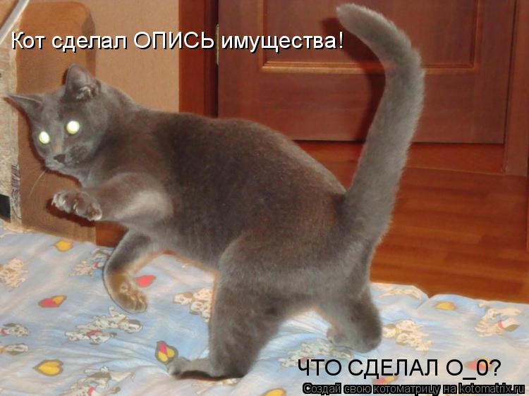 Котоматрица: Кот сделал ОПИСЬ имущества! ЧТО СДЕЛАЛ О_0?