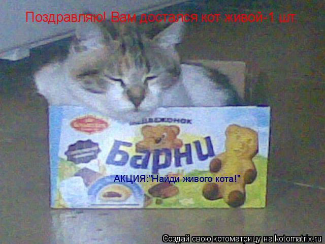 """Котоматрица: Поздравляю! Вам достался кот живой-1 шт. АКЦИЯ:""""Найди живого кота!"""""""