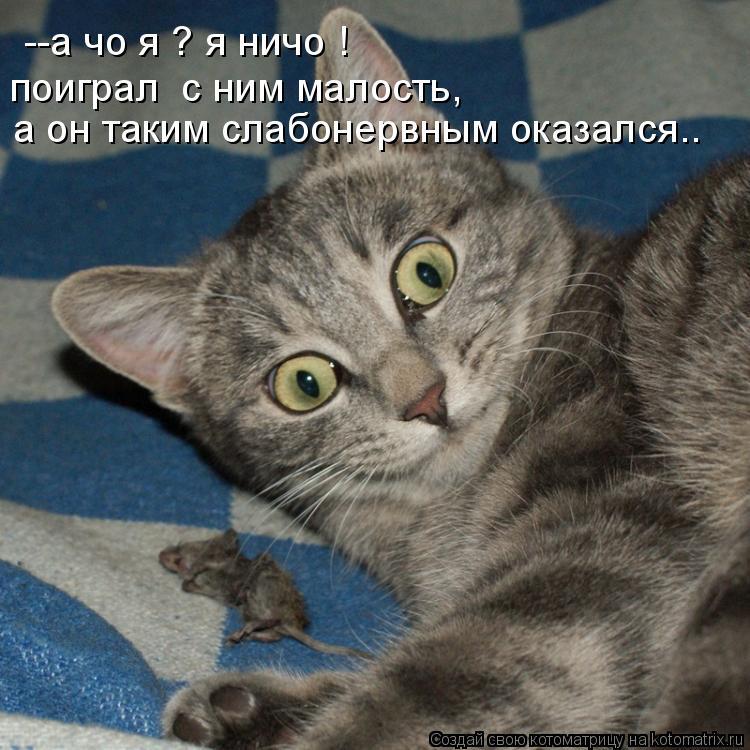 Котоматрица: --а чо я ? я ничо ! поиграл  с ним малость, а он таким слабонервным оказался..