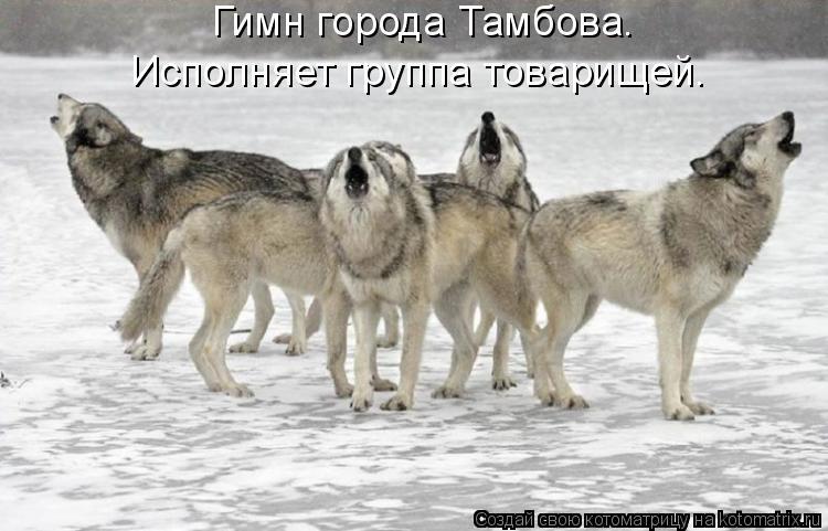 Котоматрица: Гимн города Тамбова.  Исполняет группа товарищей.