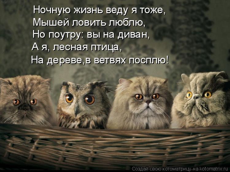 Котоматрица: Ночную жизнь веду я тоже, Мышей ловить люблю, Но поутру: вы на диван, А я, лесная птица,  На дереве,в ветвях посплю!
