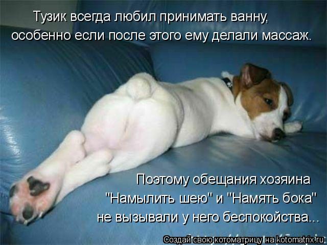 """Котоматрица: Тузик всегда любил принимать ванну,  особенно если после этого ему делали массаж. Поэтому обещания хозяина """"Намылить шею"""" и """"Намять бока"""" не"""